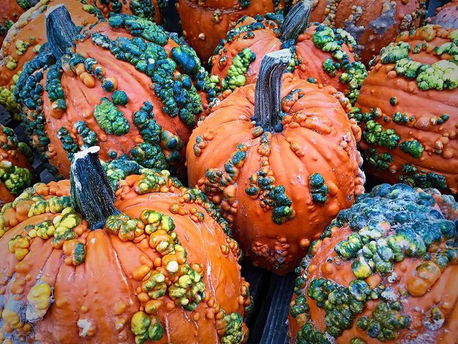 Backgrounds Change Close Up Close-up Detail Directly Above Food Food And Drink Full Frame High Angle View Knuckleheads Large Group Of Objects No People Orange Color Organic Pumpkins Retail  Variation Vegetable Color Palette