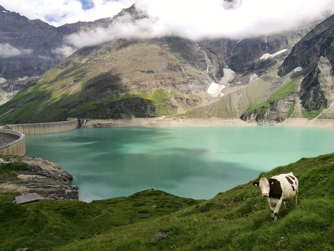 Hello World Cheese! Enjoying Life Austria Feel The Journey Mountains Alps No People Green Relaxing Lake Cow Stausee Mooserboden Clouds And Sky