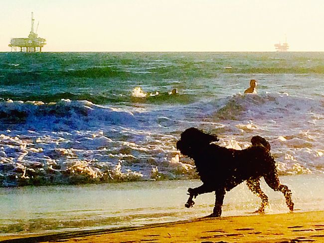 Dog on the Catwalk Enjoying The Sun California Life Is A Beach Getting Inspired SoCal Pet Photography  Beach Photography Dog Love Ocean View Dog❤
