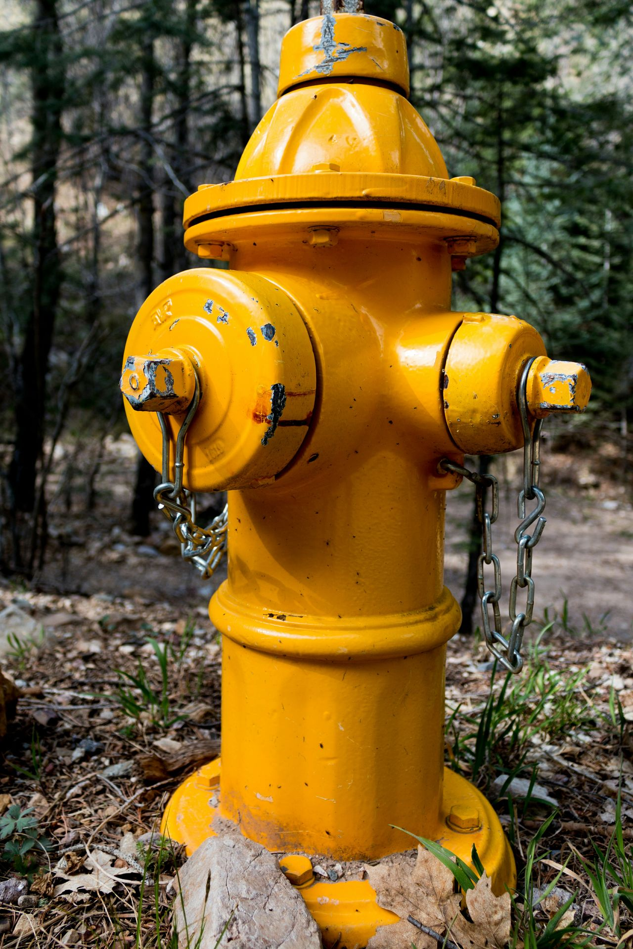 Dry Barrel FireFighting  Fire Science Fire Hydrant Photography Forest Chrome Yellow Yellow Trees Hiking