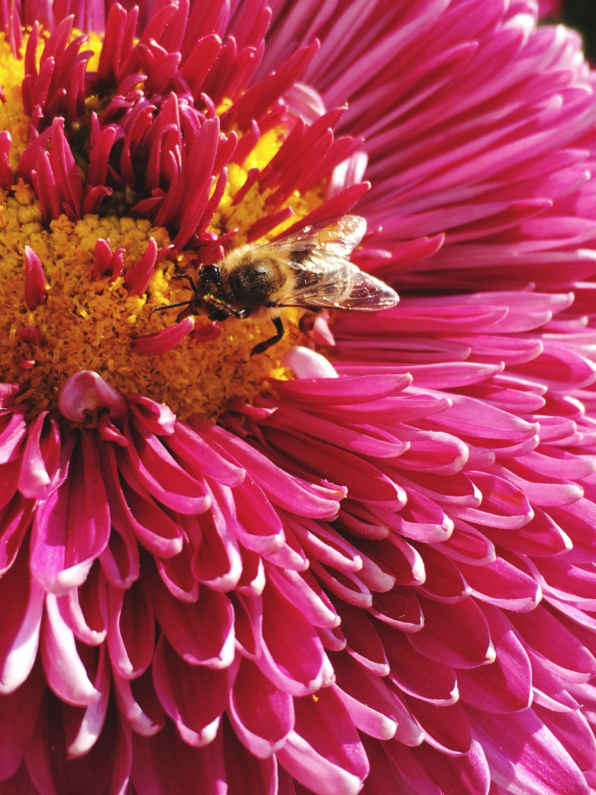 Thats Nature ! First Eyeem Photo