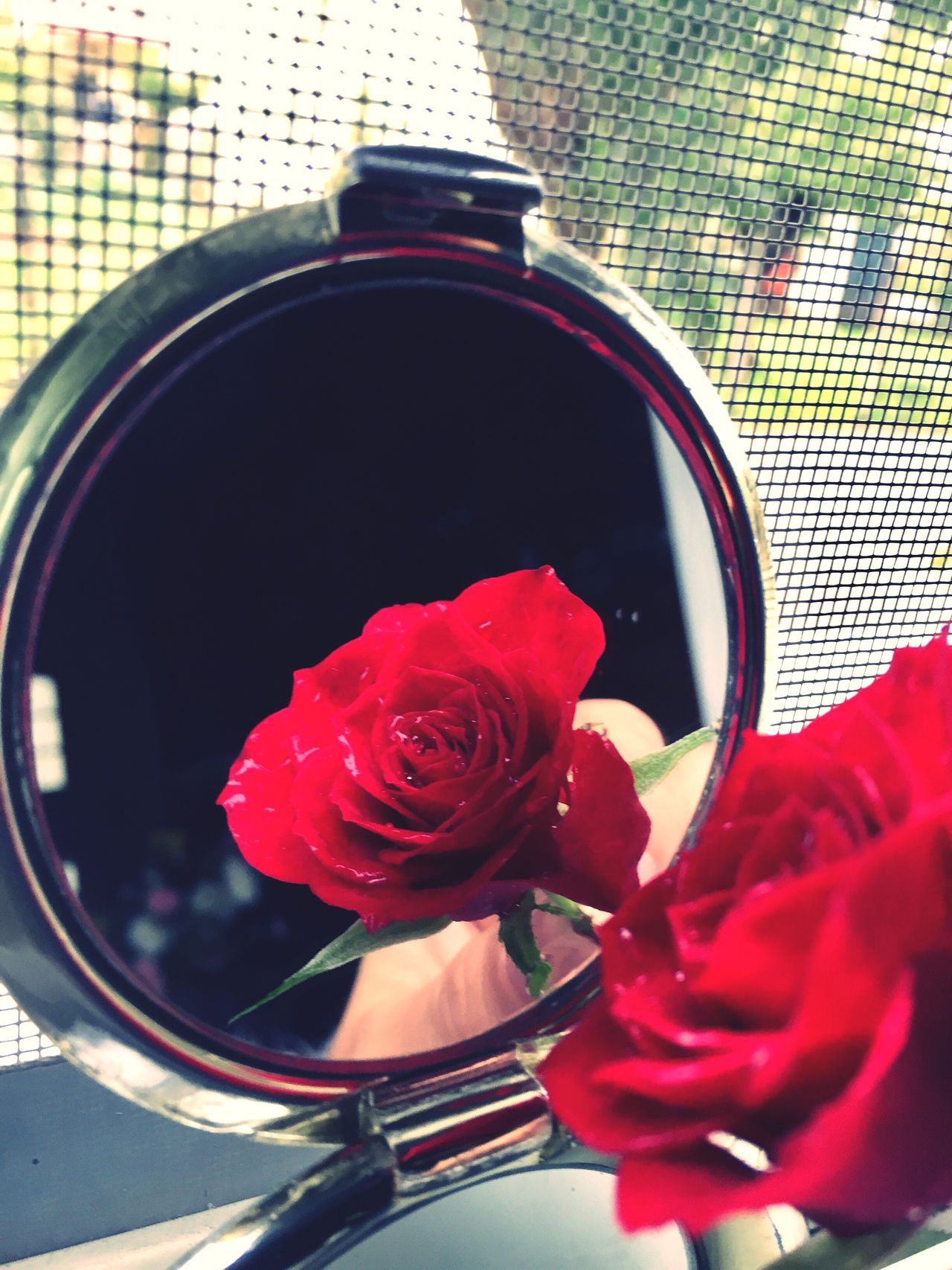 I Love Roses! Red Red Flower Close-up No People Power In Nature Power Of The Moment Mirrorselfie Mirror Reflection Love ♥ Shadow Flower Capture Happy Special Gift Wintertime !!! Snowwhite Mirror Mirror On The Wall ... Who's The Prettiest Of