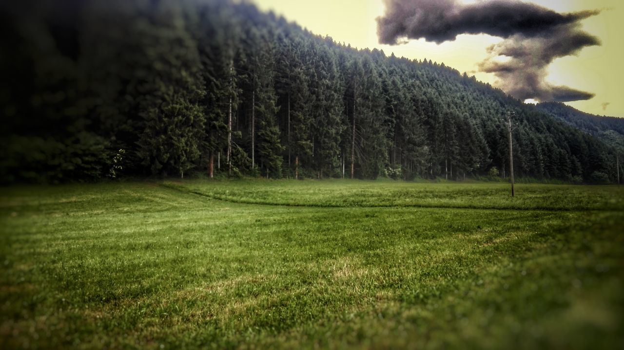 Tree Agriculture Nature Growth Field Grass Rural Scene Landscape Beauty In Nature Tranquility No People Outdoors Day Scenics Sky Travelling Green Color Trees And Sky HDR Illuminated Sky And Clouds Grass Nature Storm Cloud Cloud - Sky