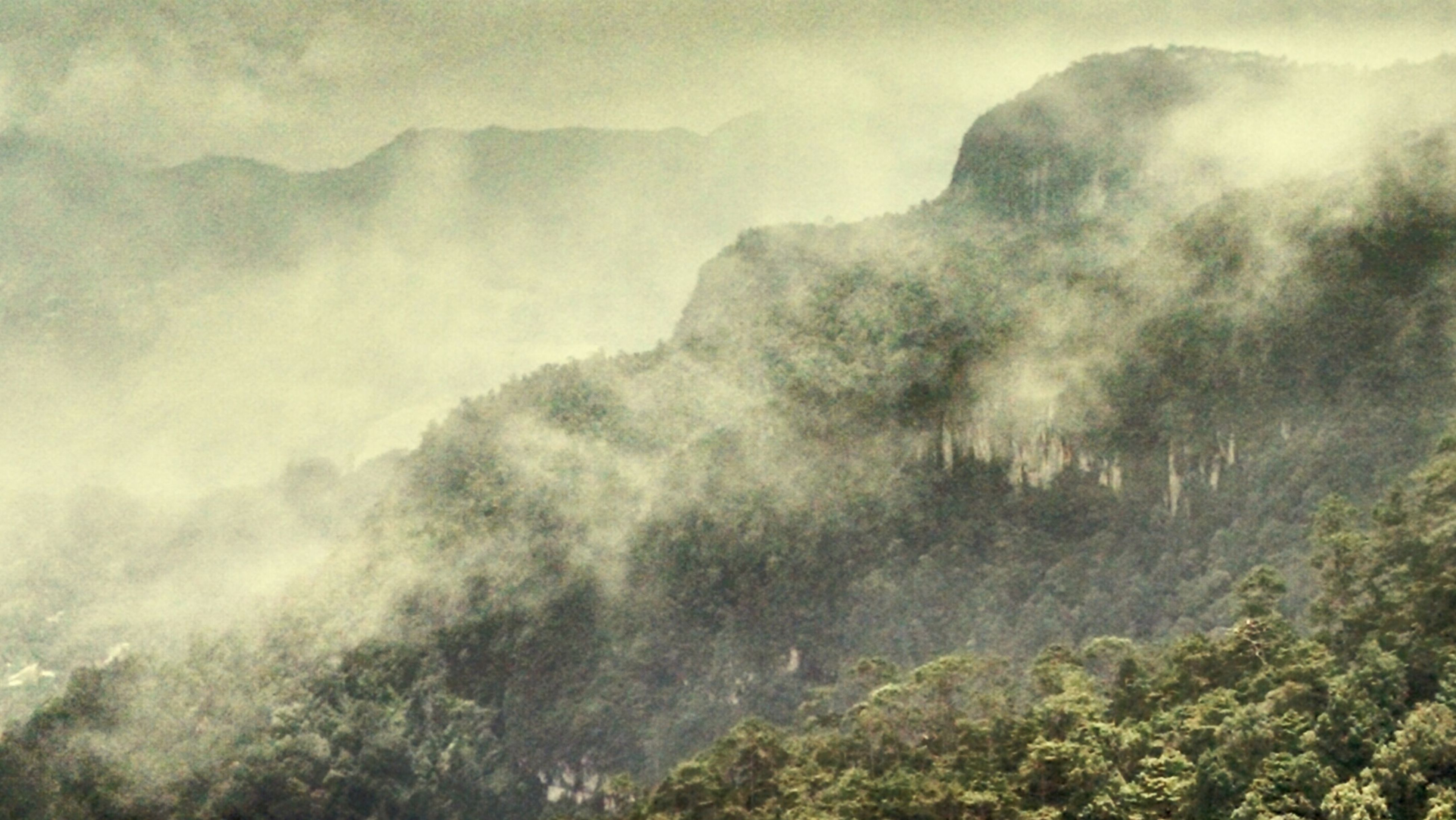 mountain, scenics, fog, tree, foggy, tranquil scene, beauty in nature, tranquility, non-urban scene, weather, nature, mountain range, majestic, cloud - sky, growth, sky, day, geology, remote, physical geography, outdoors, mist, rock formation, woodland, tourism, misty