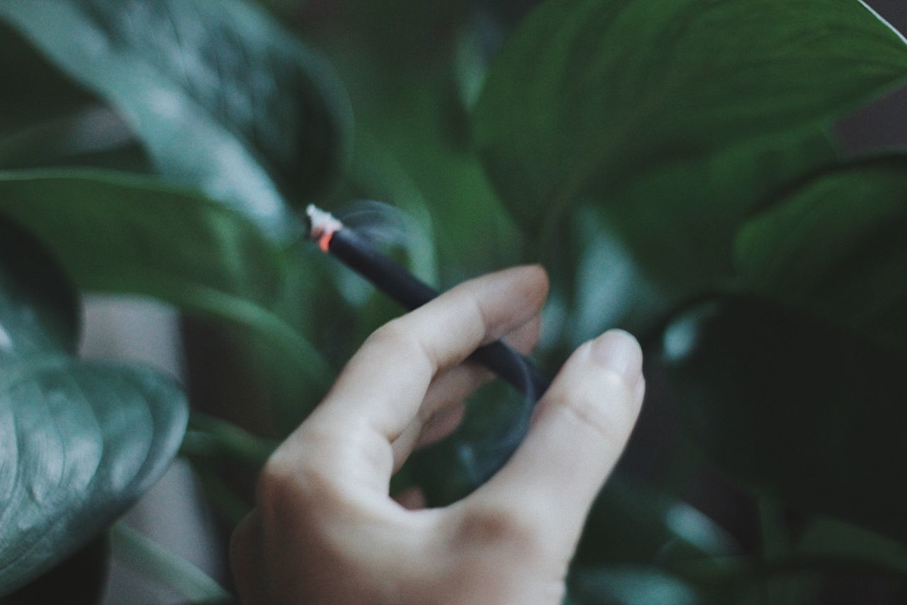 Human Hand Close-up Plant Tree Leaves Smoke Smoking Cigarette  Cigarette Time Smoke - Physical Structure Dark Night Relaxing Unhealthy Life Lifestyles Grain Green
