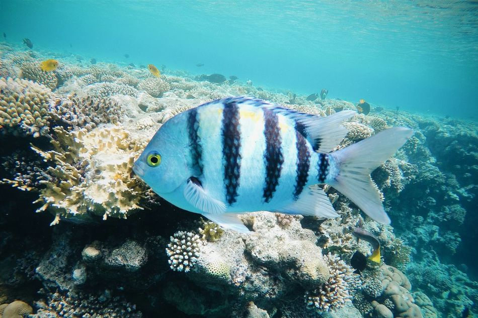 Beautiful stock photos of fish, Animal Themes, Animals In The Wild, Beauty In Nature, Coral