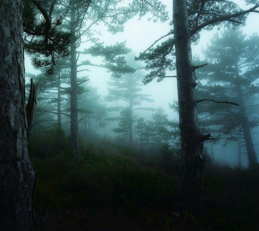 Dalıp gidiyorum belirsizce. İçim tıpkı bu orman gibi ilerisi görünmüyo, geleceğimi göremiyorum .. Orman Karanlik Belirsizlik Uzaklar EyeEm Best Edits Landscape EyeEm Best Shots First Eyeem Photo Blackandwhite Photography