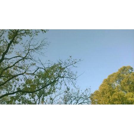 Sky Tree Park Plaza Lanus