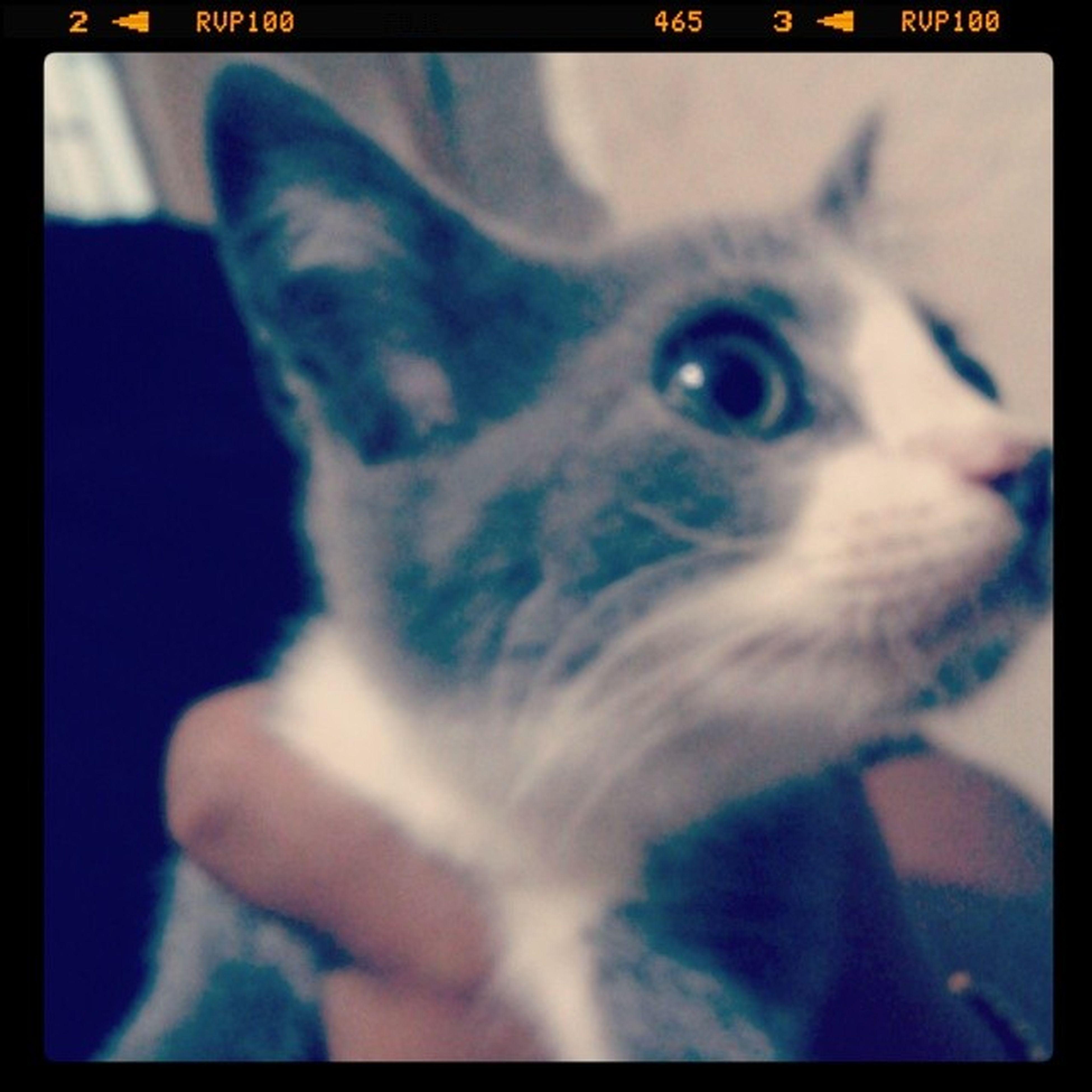 Novo integrante da familia. O gandalf. *_* AchoQueEuViUmGatinho Cat