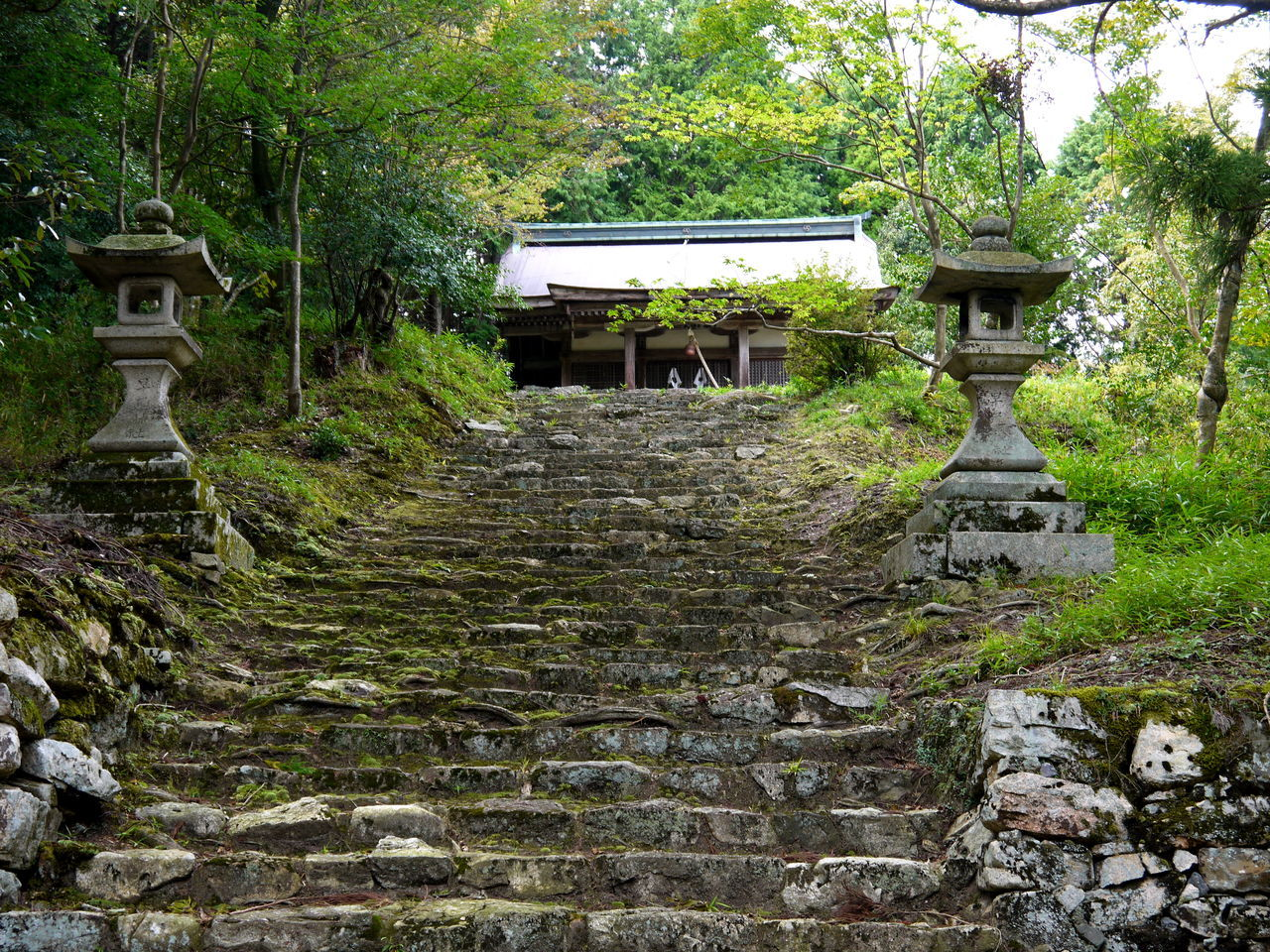 Climbing Japan Moss No People Old Rough Sakamoto Stone Lanterns Stone Material Stone Steps Temple The Past The Way Forward Tranquility Tree