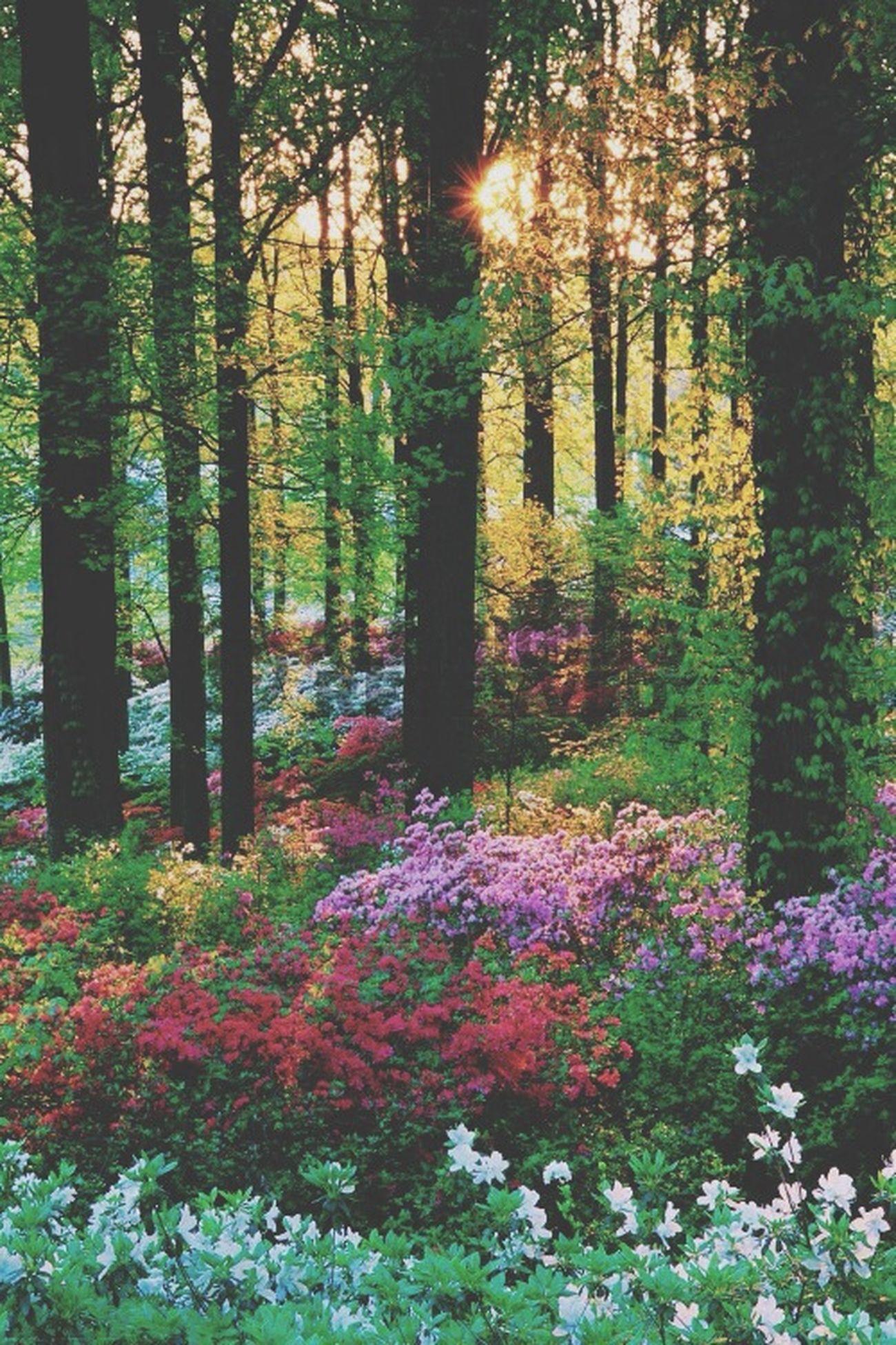 ?? Forest Nature Pretty
