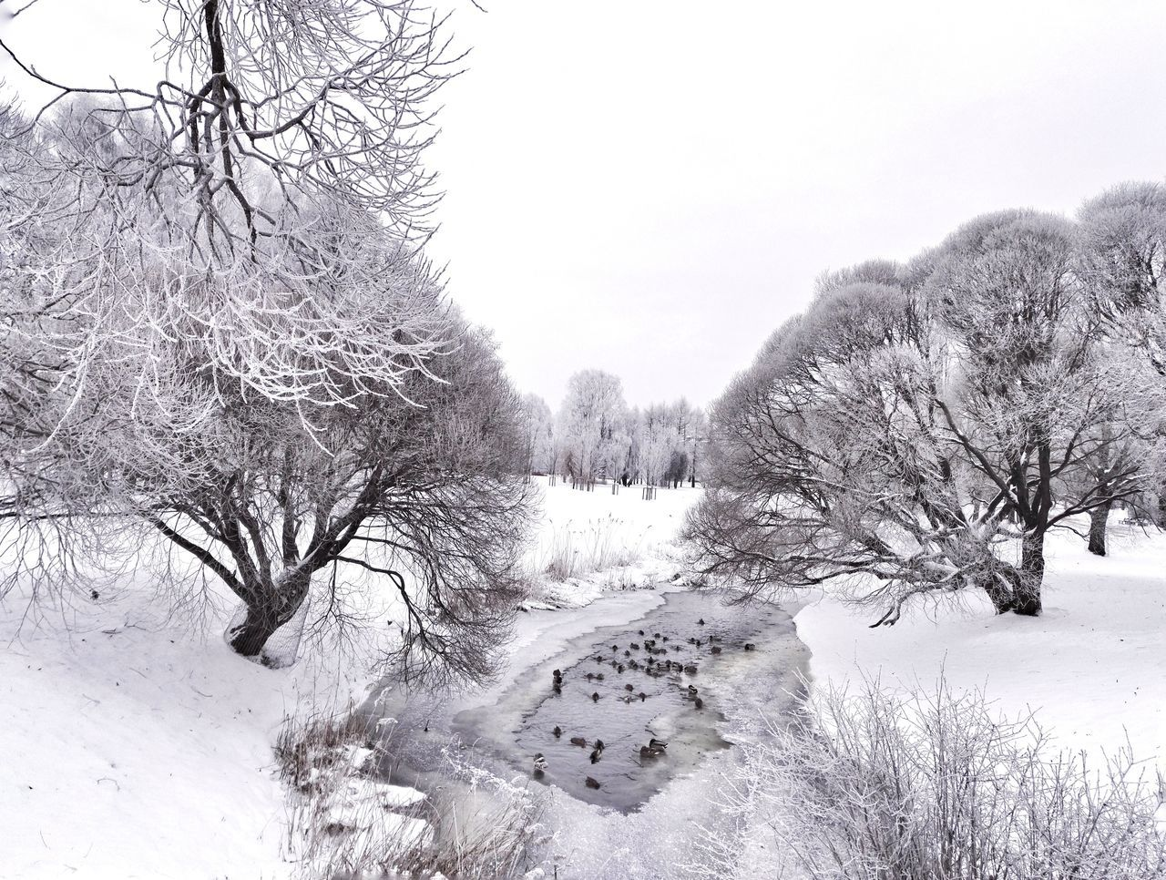Tree Nature Tranquility Day City Enjoying Life Hello World Snow Cold Temperature Winter Black And White Beauty In Nature Cityscape Water_collection Water Weather Ducks In Water Standing Water