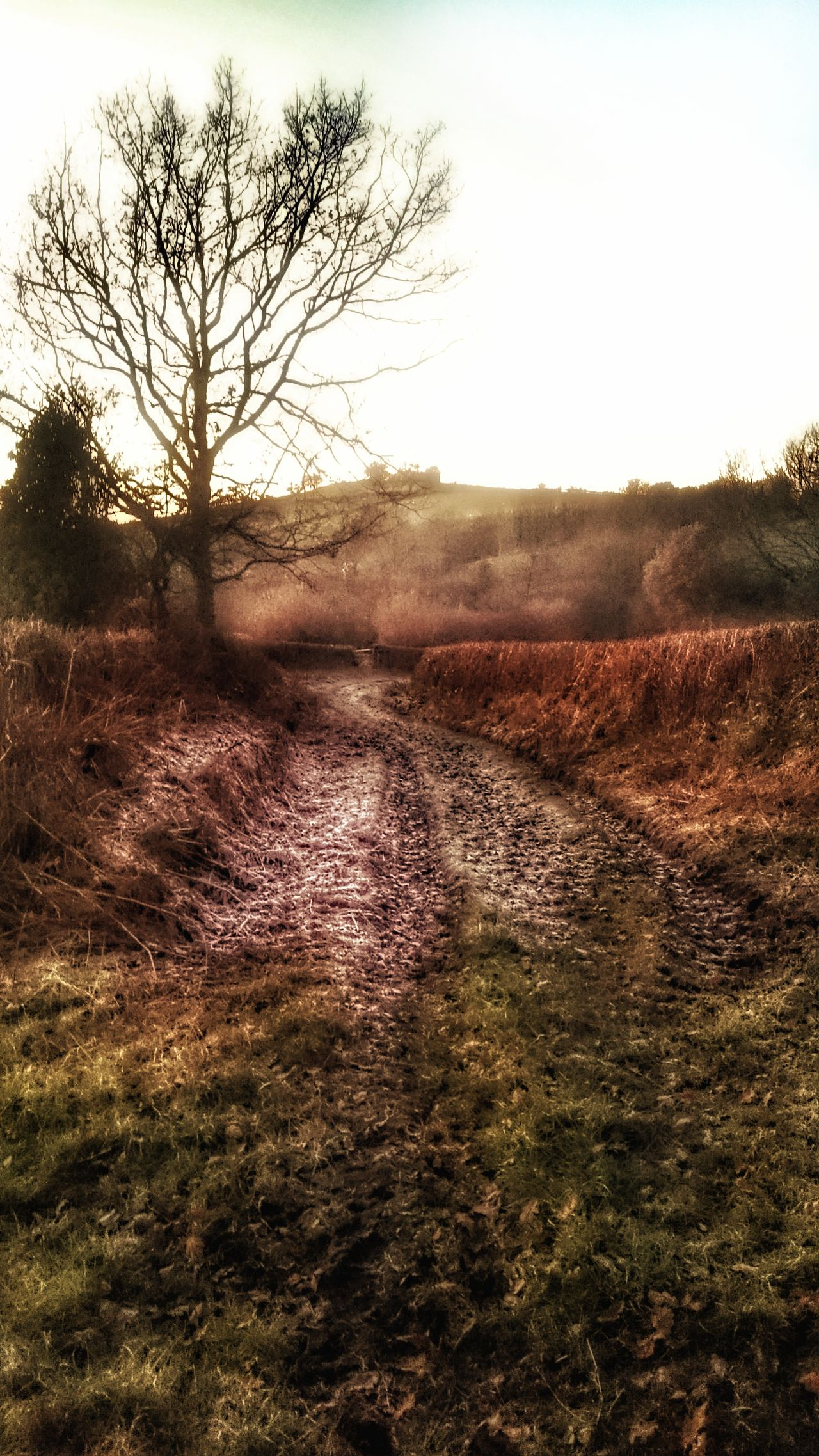 Tree Outdoors Tranquility Beauty In Nature Frosty Frost Frosty Mornings Frosty Days Track Country Walks Treetastic Wales You Beauty Welsh Countryside Welsh Valleys Wales❤ Disused Road When Nature Takes Over Fern Bare Tree Sky No People Landscape
