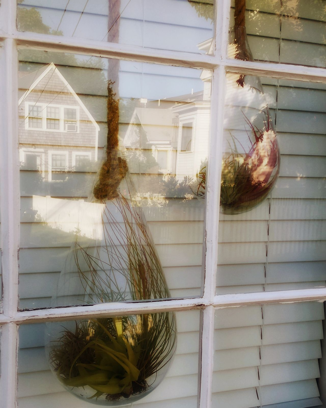 No People Plant Reflection In The Window Provincetown street scene Pivotal Ideas