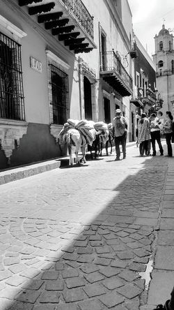 People And Places Animal on the city Animals Street Photography