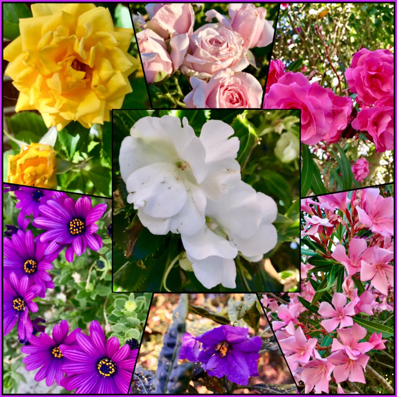 All of the flower's I've taken today, made in a collage💜💚💙💛❤️ Flower Flowers Beautifulcolourfulflowers🍃🌸🌺🌼🍃 Plants And Flowers Beautiful😍😍😍 Blooming Flowerseries Summerflowers WhileIwaswalking Flowervibes🌸🌺🌼 Flowercollage🌸🌺🌼 FlowerLove🌸💙🌺💚🌼❤️ MyPhotographyoftheday💚🌸📱📸🌼💜