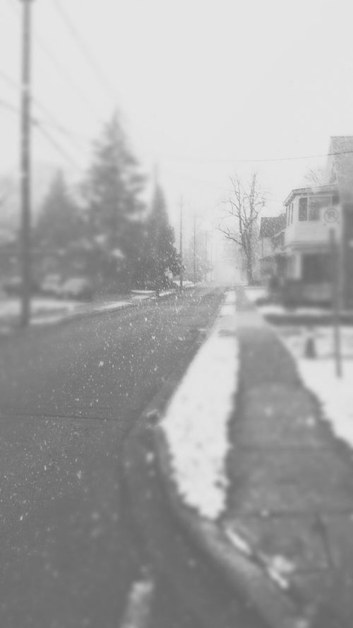 Winter Wonderland Winter Snowing Snow ❄ Showcase: November November Trees Cold Winter ❄⛄ Blowing Snow Winds &clouds ❄ Snowflakes ❄ The Great Outdoors - 2015 EyeEm Awards The Moment - 2015 EyeEm Awards 2015RTAG AlmostChristmas Photography Nature Shades Of Grey Black And White Photography Streets Mywinterfavorite Mywinterfavorites Showcase: December Landscapes With WhiteWall Showcase: January