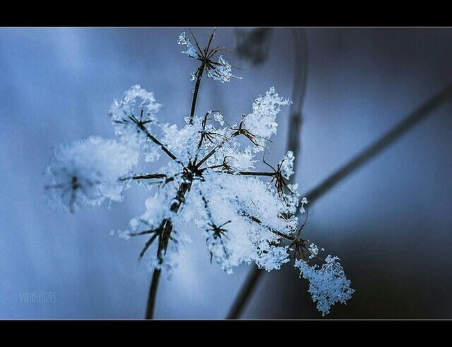 Photoart Taking Photos Landscapes Macro Art Macro Photography Flowers