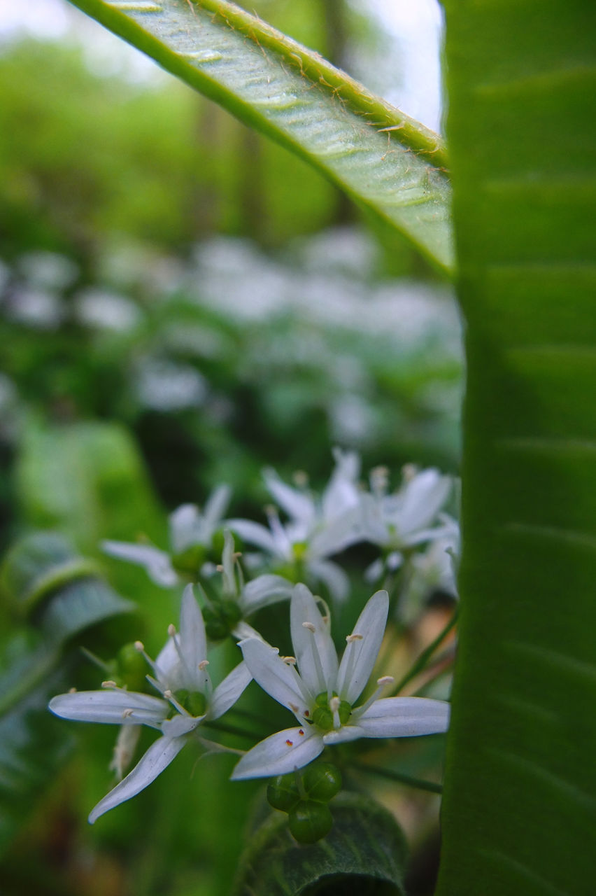 growth, plant, nature, green color, leaf, no people, beauty in nature, close-up, outdoors, freshness, fragility, day