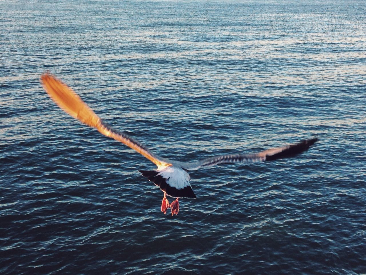 wingspan party San Francisco Nature Birds EyeEm Nature Lover