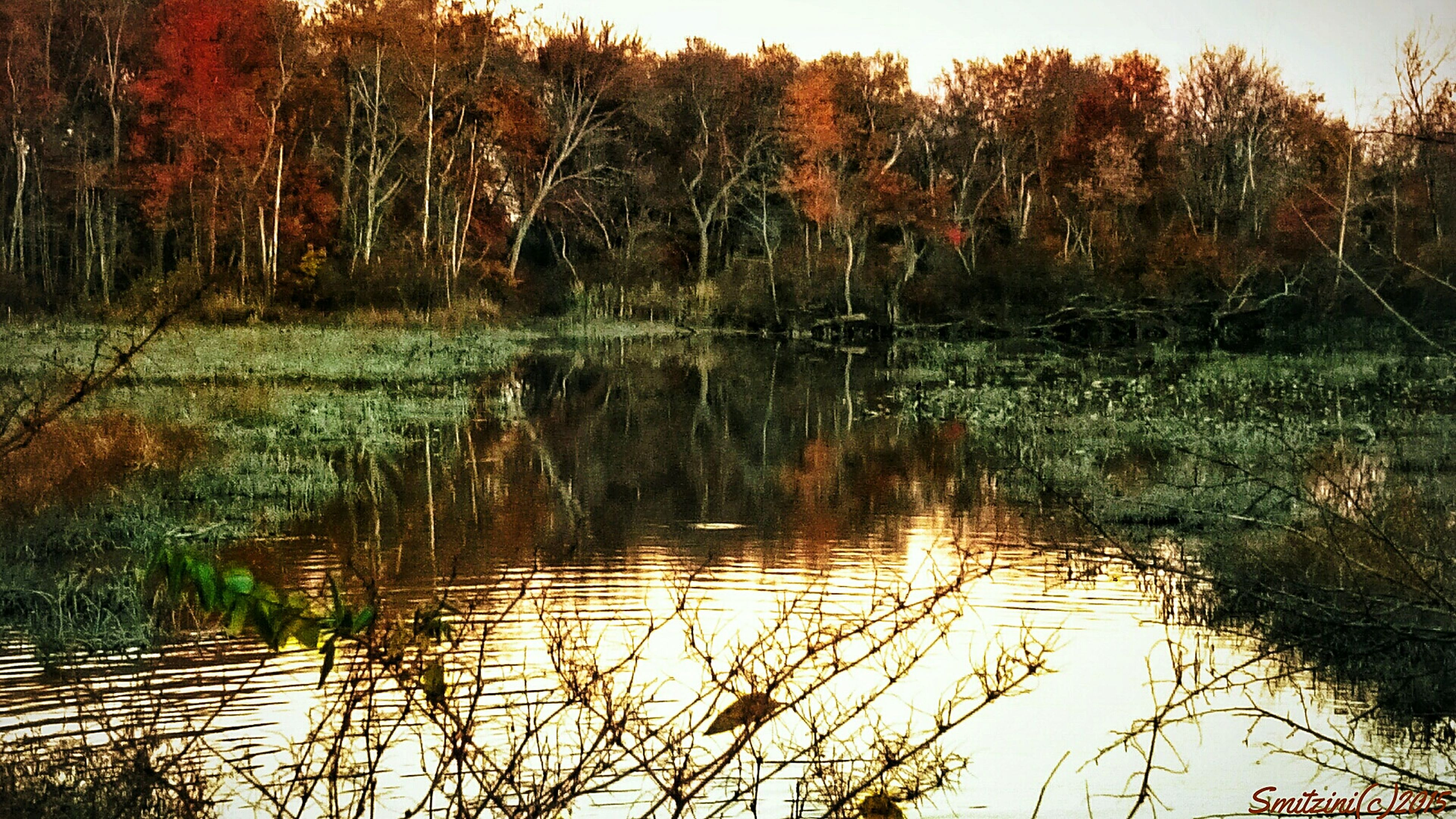water, reflection, lake, tree, tranquility, tranquil scene, scenics, beauty in nature, nature, growth, forest, idyllic, plant, waterfront, non-urban scene, no people, lakeshore, sunset, outdoors, orange color