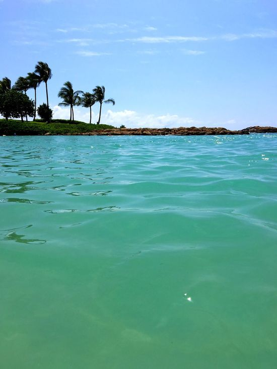Palm Tree Water Sky Tranquility Nature Tree Sea Beauty In Nature Beach No People Outdoors Scenics Day Vacations Hawaii Paradise Ocean Island Tree Summer Travel Destinations Travel Blue Horizon Over Water Green Color