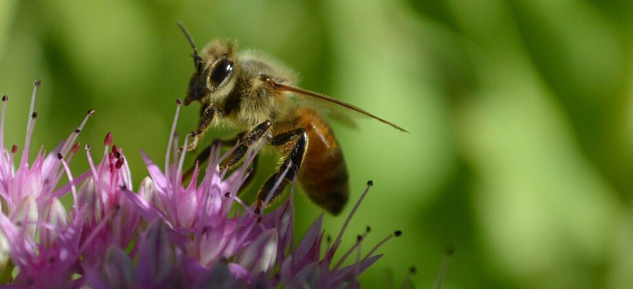 Beautiful stock photos of bee, NULL