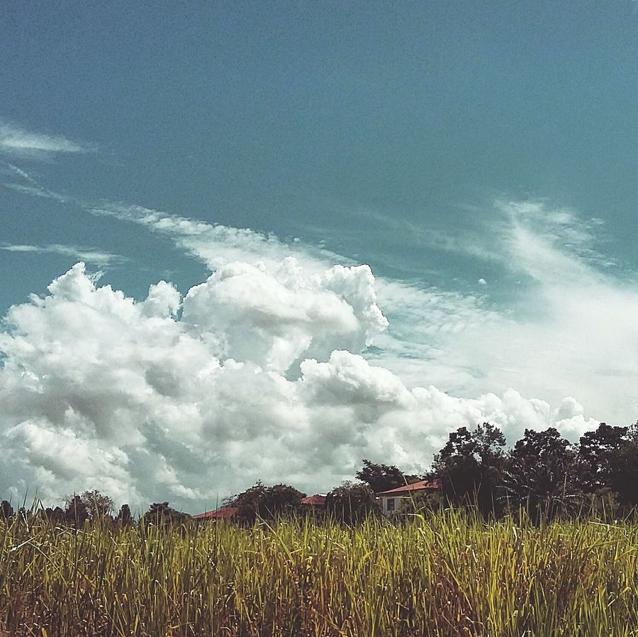 Only blue skies above our heads ✌Rural RJ 021rio First Eyeem Photo