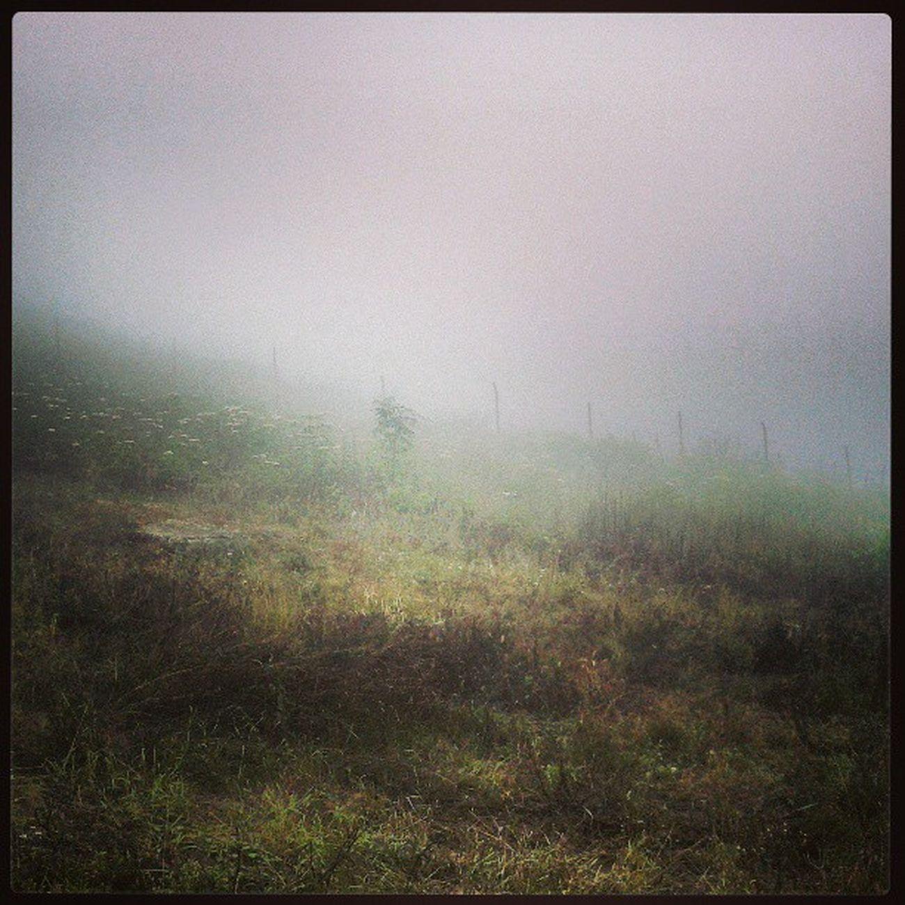 مرا در ابر عشقت ناپدید کن بی ادعا تر از علف های کوهزار Iran Jaherdeh