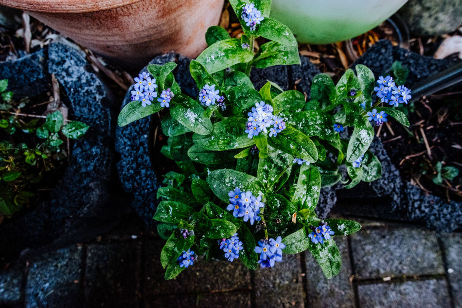 Beauty In Nature Close-up Day Flower Flower Head Fragility Freshness Green Color Growth Healthy Eating High Angle View Hydrangea Leaf Nature One Person Outdoors People Plant Vegetable