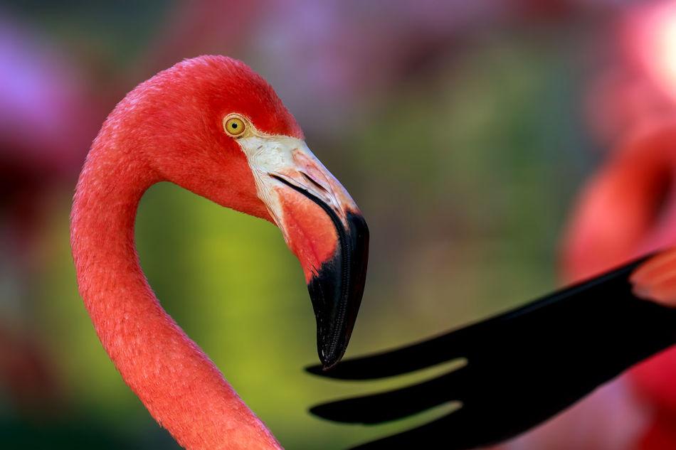 Beautiful stock photos of wildlife, Attentive, animals In The Wild, avian, beak