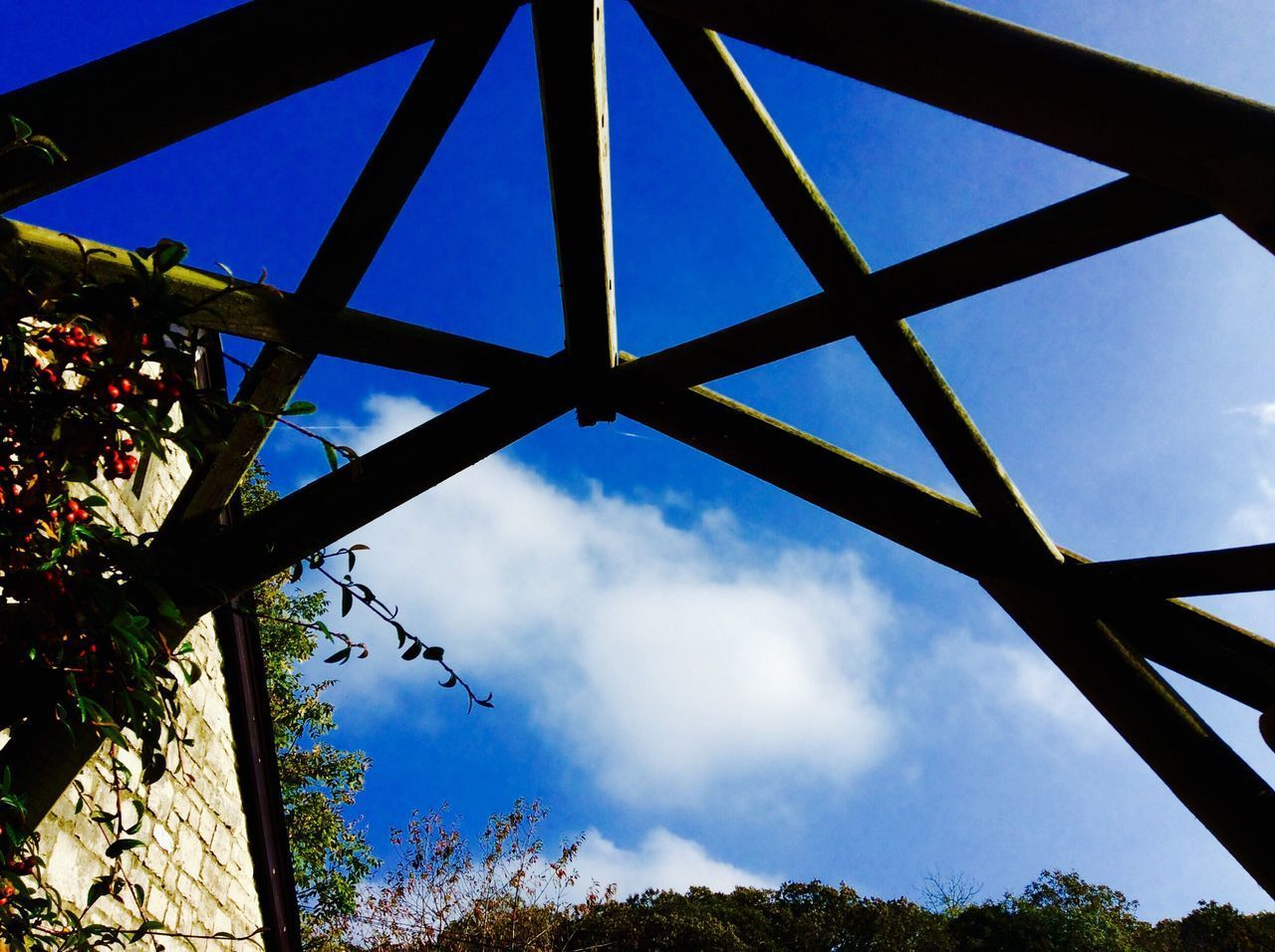 Low Angle View Sky No People Growth Day Built Structure Nature Tree Architecture Indoors  Close-up Greenhouse Blue Sky