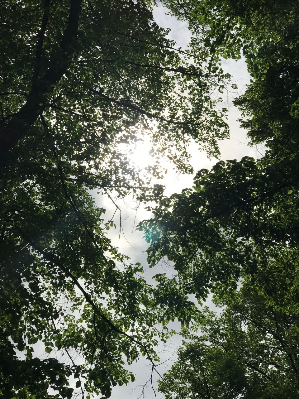 tree, low angle view, growth, branch, nature, day, beauty in nature, tranquility, outdoors, no people, forest, green color, sky