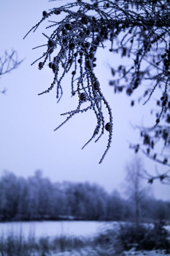 Branch Cold Cold Temperature Depth Of Field Focus On Foreground Frost Ice Mystery Mystery Girl Natural Pattern Selective Focus Snow Traveling Weather White Winter