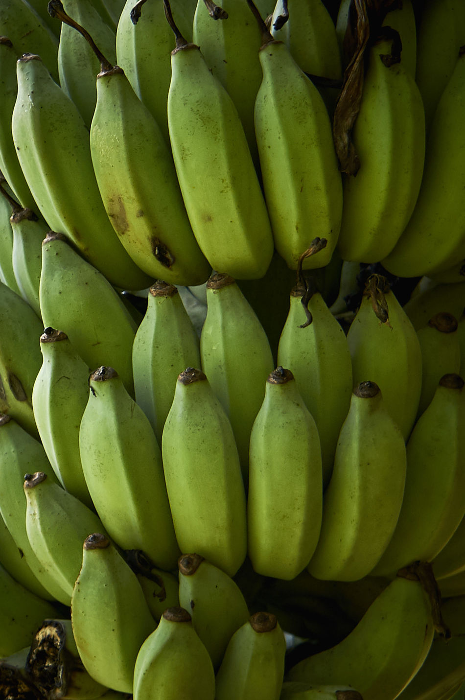 Abundance Banana Banana Banana Tree Bananas Close-up Day Food Food And Drink Freshness Fruit Green Green Color Green Color Healthy Eating Market No People Outdoors Stack Supermarket Tree