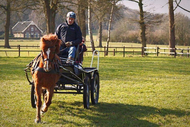 Paard Mennen Ruiter Ruitersport Wedstrijd Wedstrijden