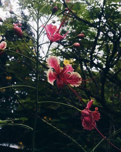 VSCO Vscocam Flowers Mobilephotography