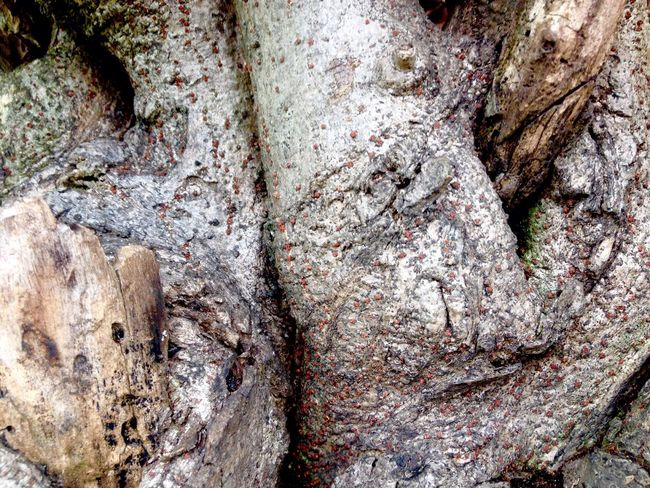 Tree Trunk Full Frame Textured  Close-up No People Outdoors Nature Horizontal Day Detail Abstrack Still Life