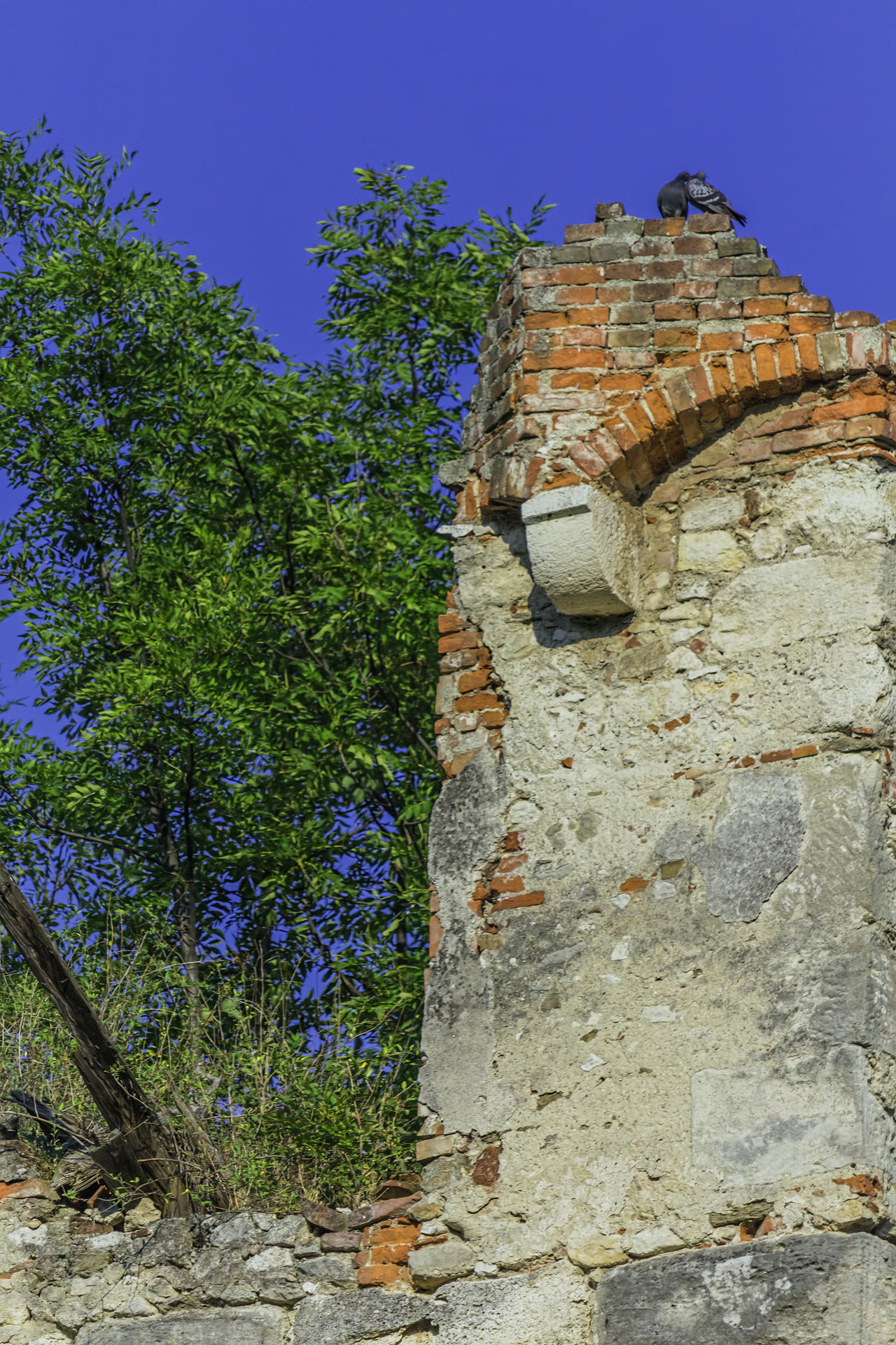Old Castle Pottendorf Architecture Castle Castle Ruin Lost Place Lost Places Lostplace Lostplaces Nature Old Buildings Ruined Building Ruins Ruins Architecture Rural Scene