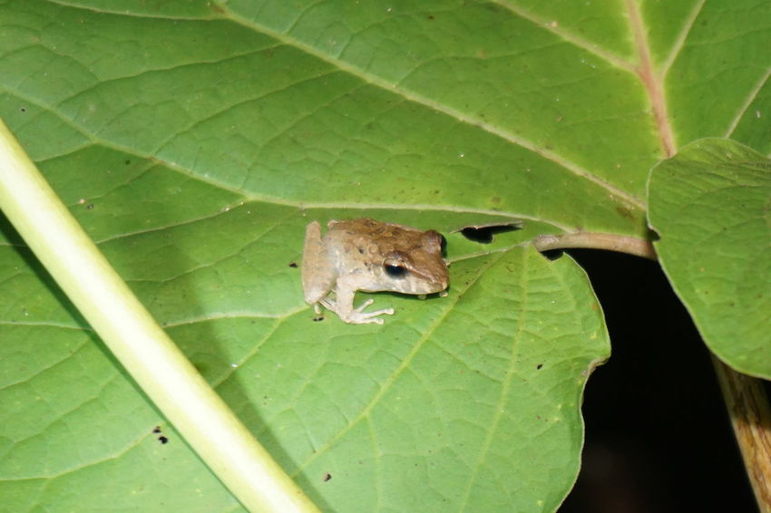 Toad Amfibian Animals In The Wild Brown Frog Cute Frog Leaf Nature Plant Tiny Frog Tiny Frog On Leaf