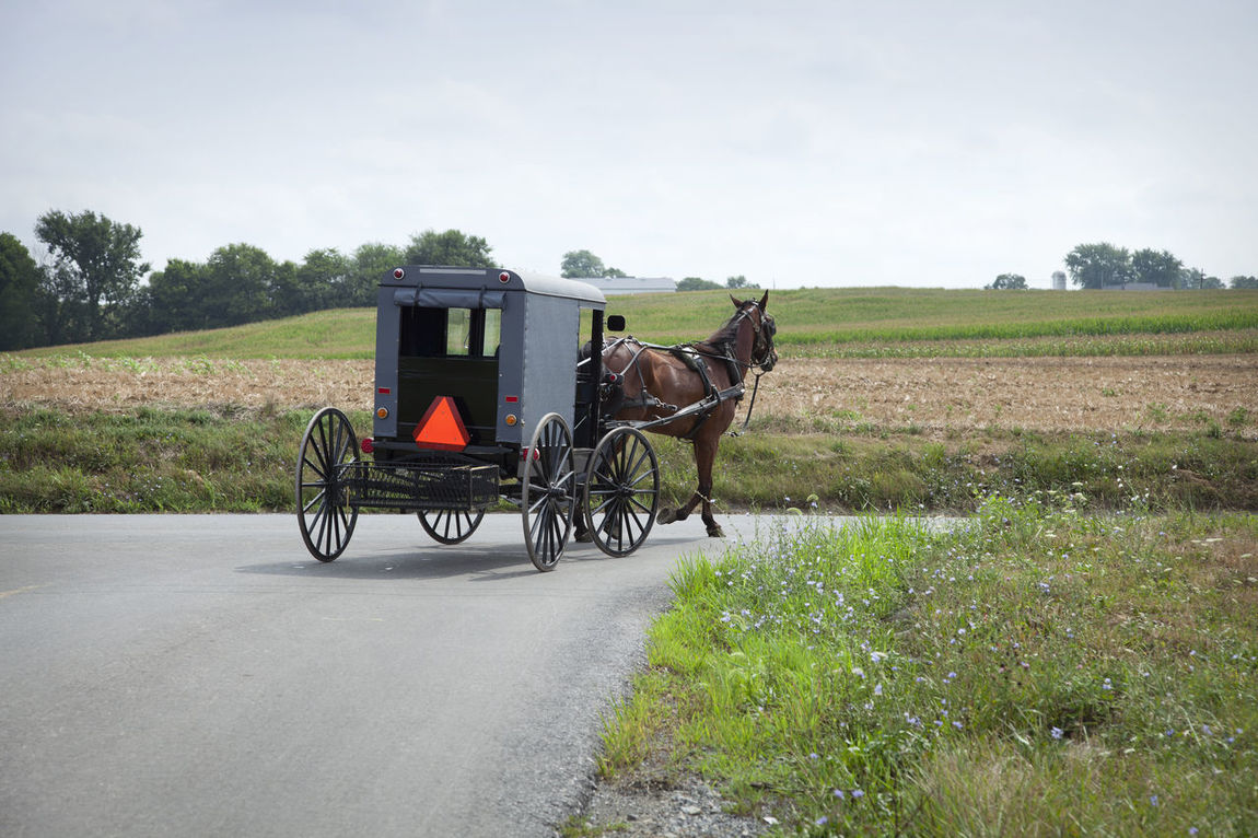 Amish buggy turns a corner in rural Pennsylvania Amish Buggy Carriage Fields Harness Horse Old Fashioned Pennsylvania Reflector Road Rural Sunlight Trees Turn USA Wheels
