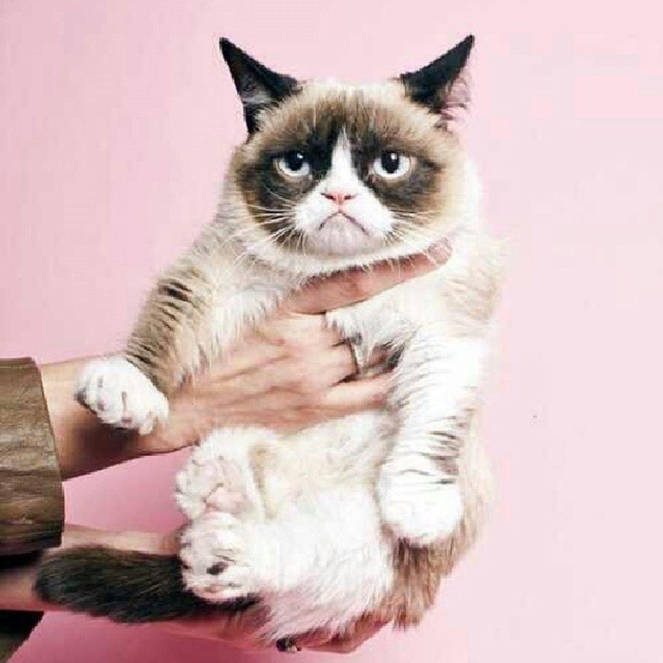 Hooww Grumpy cat Meaow Pinkk
