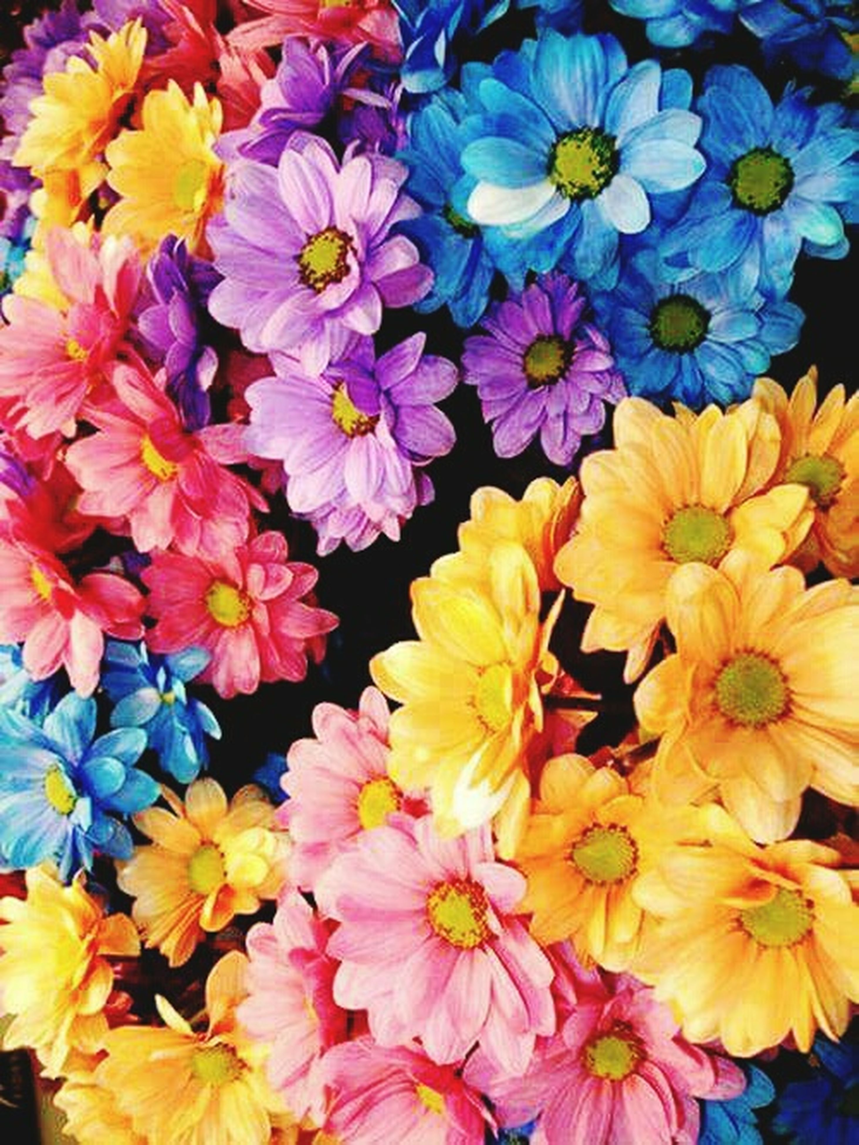 flower, full frame, freshness, petal, backgrounds, fragility, flower head, multi colored, abundance, beauty in nature, yellow, high angle view, close-up, blooming, nature, purple, colorful, vibrant color, growth, variation
