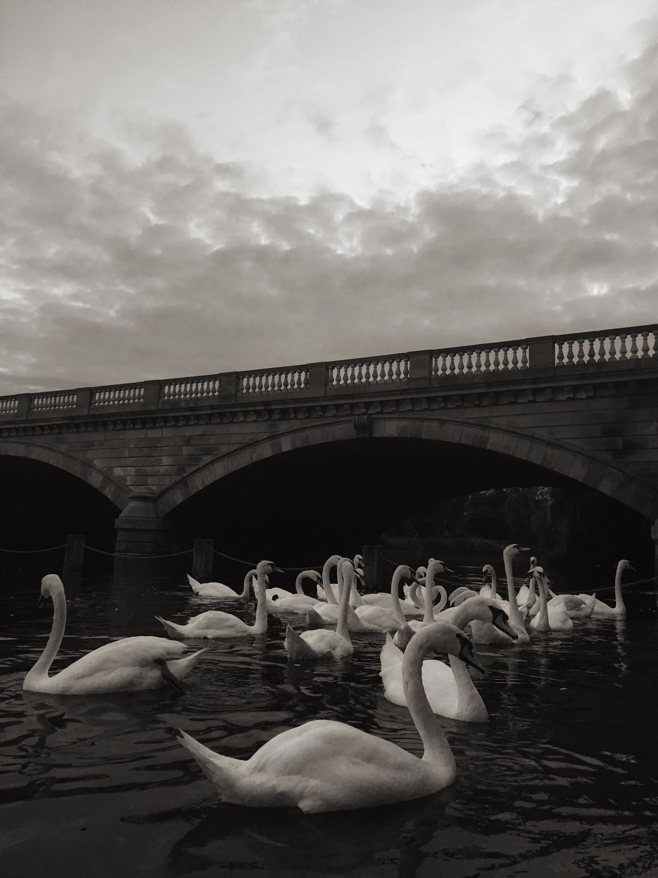 Swantastic Bridge Over Water Swans On The Lake Blackandwhite Golden Hour Sunset Artistic Water_collection EyeEm Best Shots Fine Art Photography Showcase July Picturesque The Week Of Eyeem Fine Art Nature Photography Beautiful Day