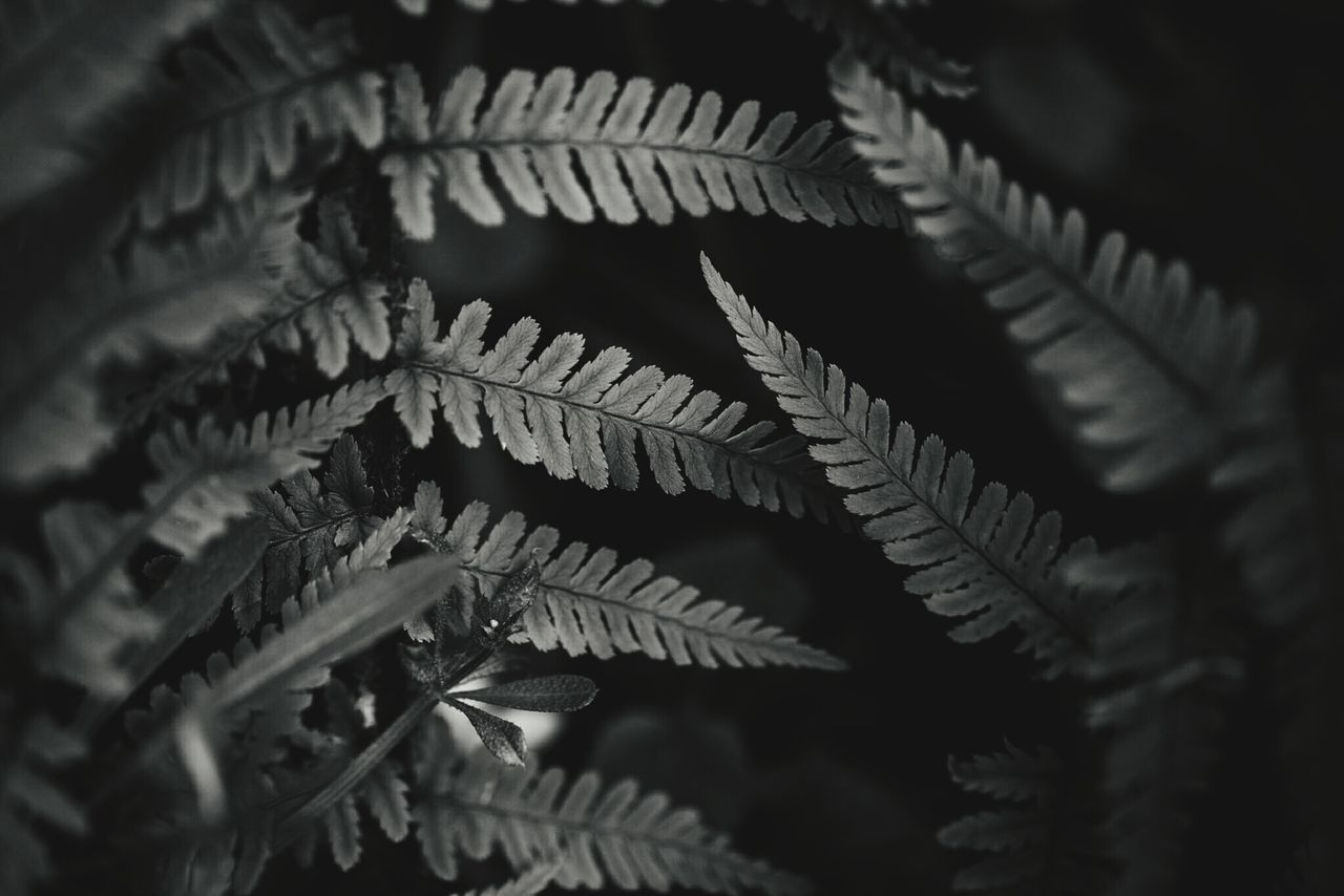 ~ In the Mind's Eye, a Fractal is a way of seeing Infinity. ~ Nature Full Frame Close-up No People Selective Focus Day Details Moment Of Zen Shadow Blackandwhite Pattern Outdoors Light And Shadow Getting Inspired Ferns Plant Fractals Leaves Nature_collection Macro Photography Natural Beauty Beauty In Nature Break The Mold Lines And Shapes Contrast