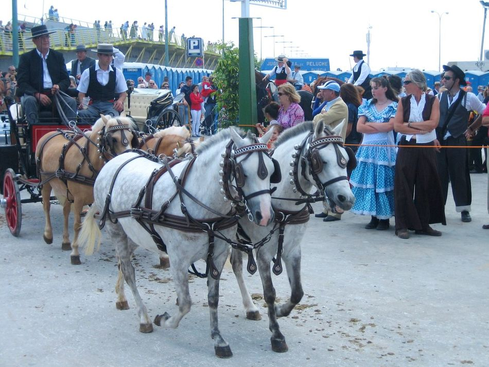 Not only single riders but entire carriages were participating in this marvelous parade. Celebration Cultural Tradition Festival Herbivorous Horse Carriage Horses Lifestyles Sevillanas Torrevieja, Spain Traditional Clothing Traditional Costumes Travel Photography Traveling White Horses Working Animal Original Experiences Feel The Journey Showcase June People And Places