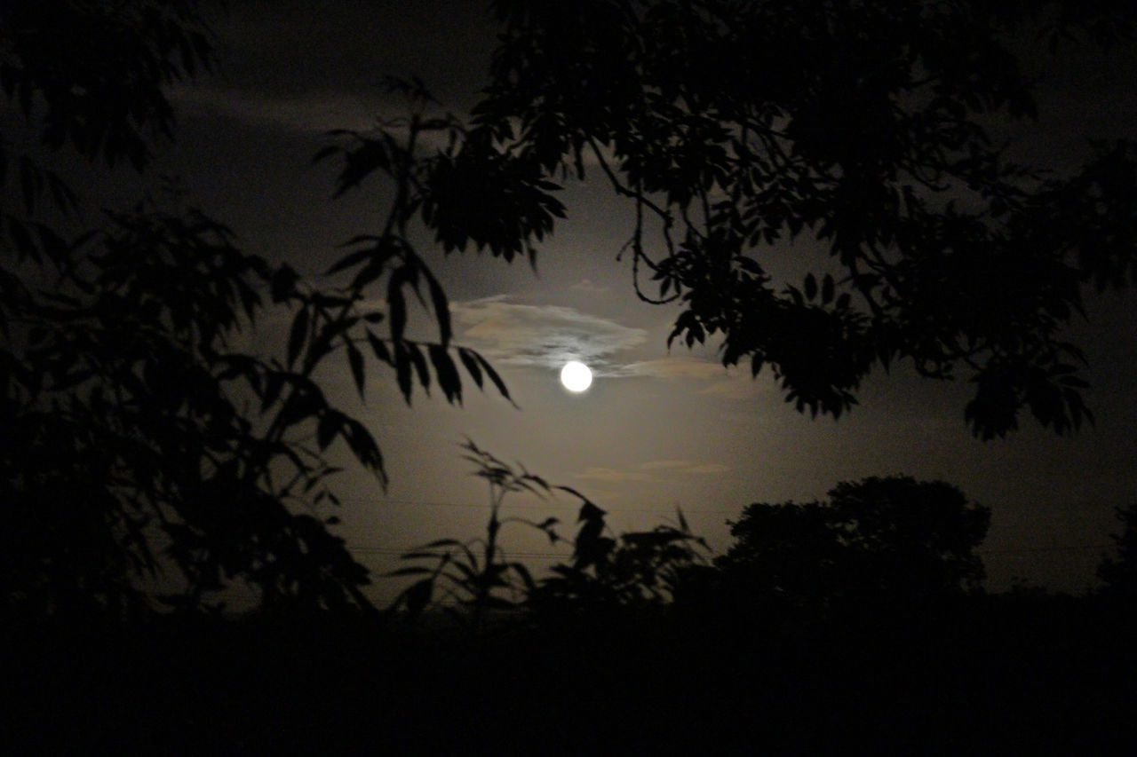 tree, silhouette, moon, nature, beauty in nature, growth, night, sky, scenics, no people, outdoors, sunset, dusk, tranquil scene, tranquility, low angle view, branch, astronomy