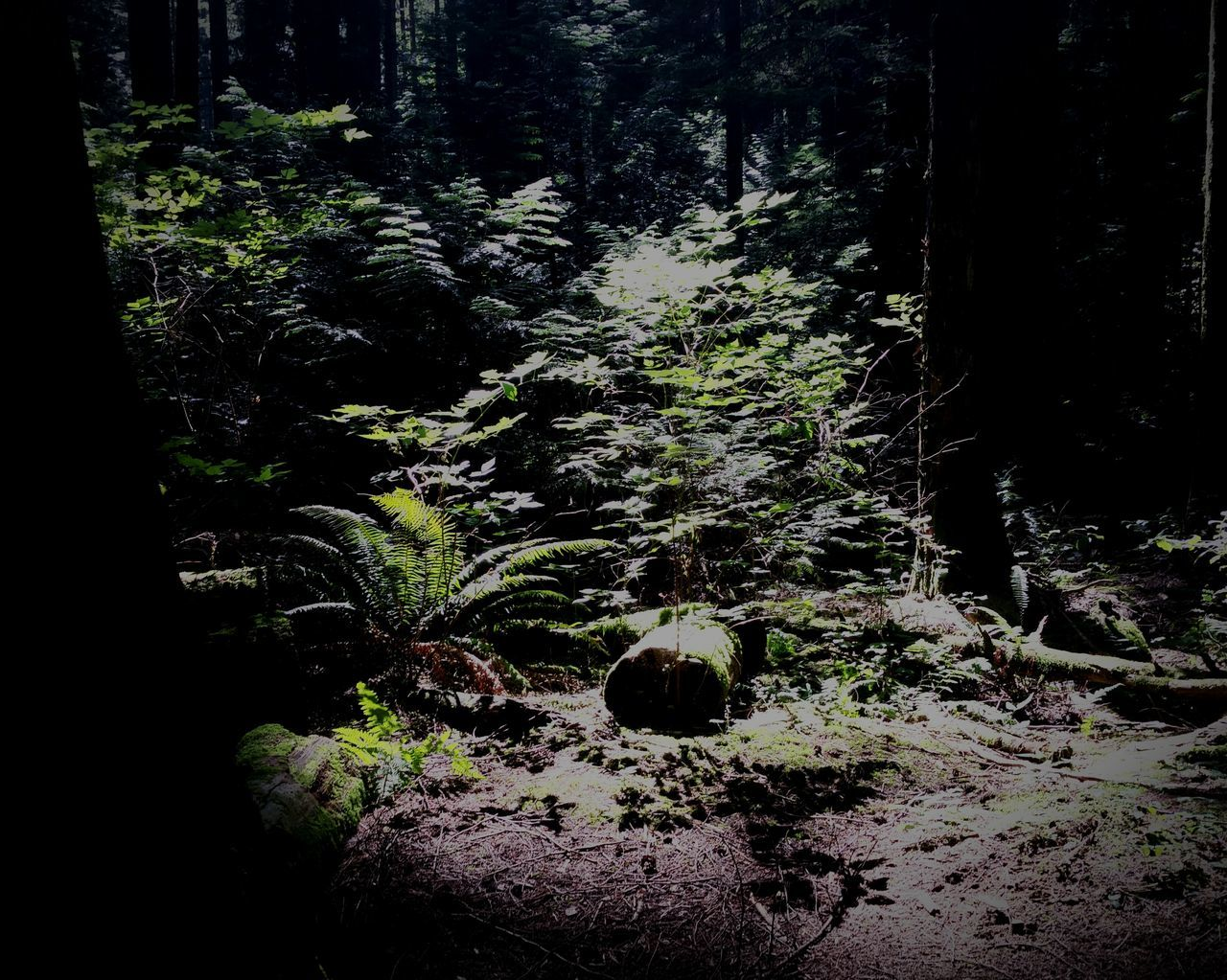 Trail Moment Forest Nature_collection University Endowment Lands Ecological Reserve UBC Vancouver BC Light And Shadow