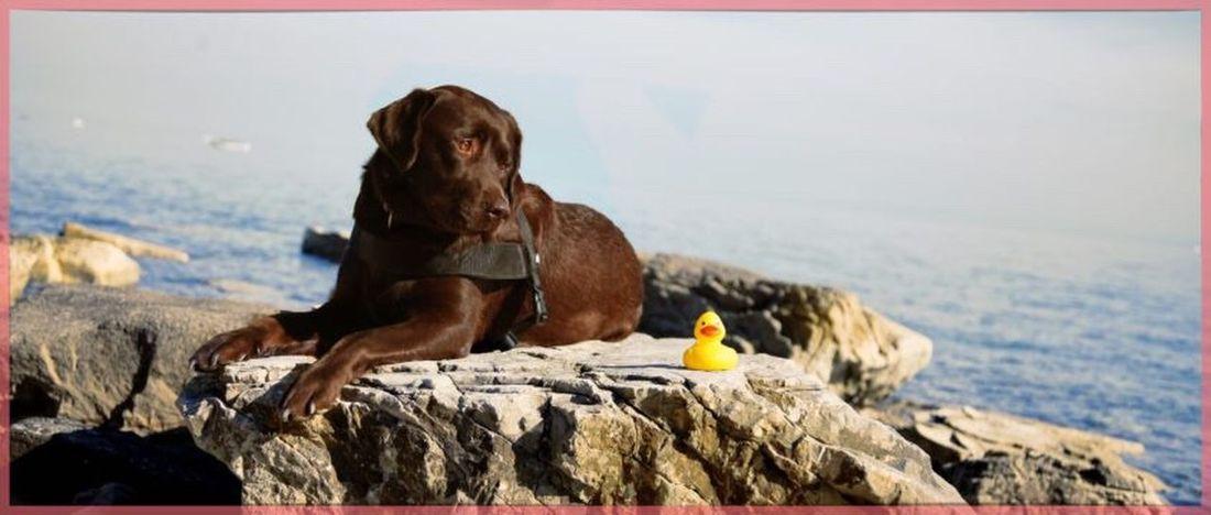 Sea Rock - Object Water Beach Animal Themes Nature Sky Labrador Retriever Retriever Pets Dog