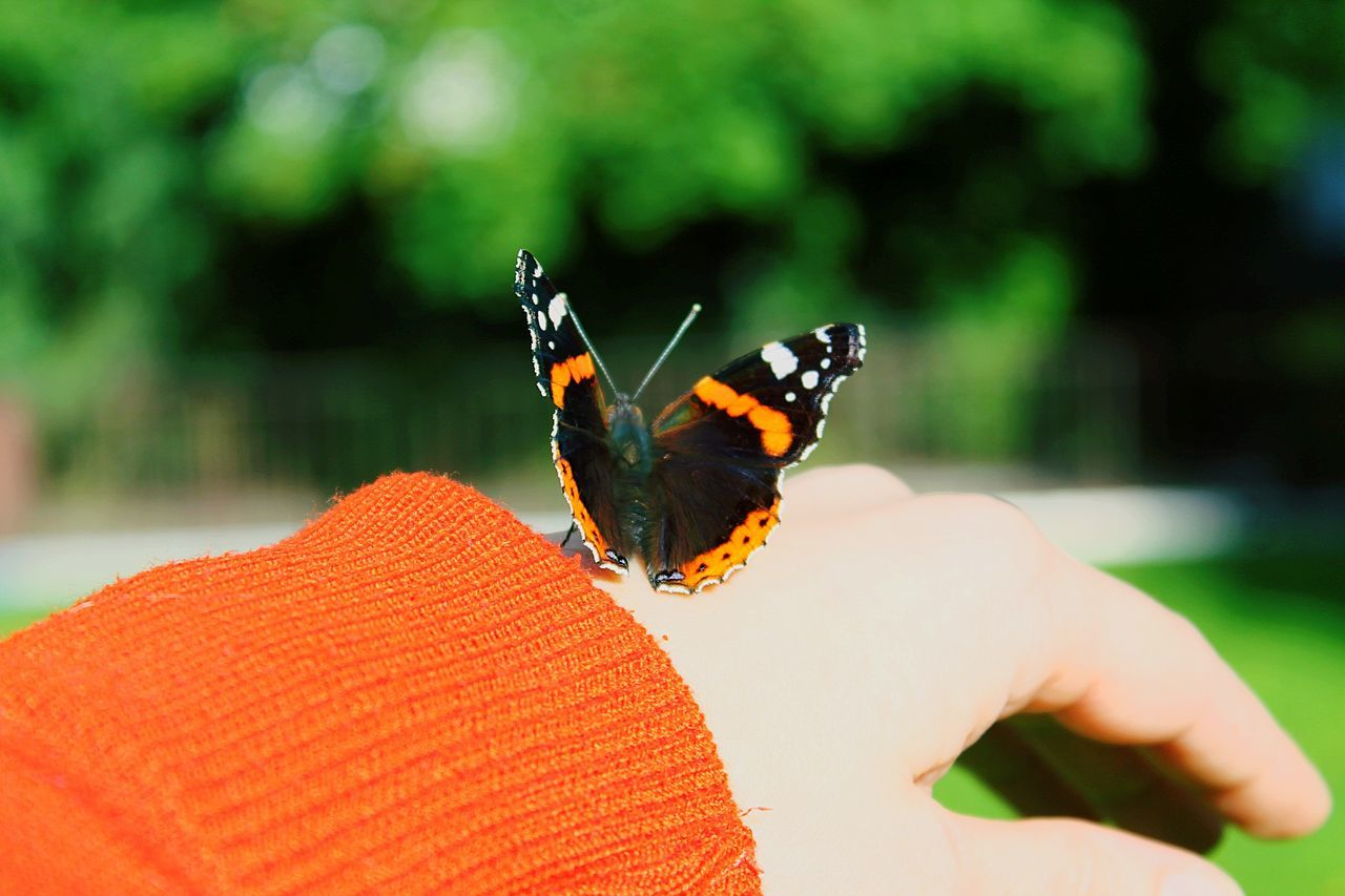 POV From My Point Of View perfect moment butterfly animal portrait Deceptively Simple butterfly collection special moment Live for the Story Capture The Moment